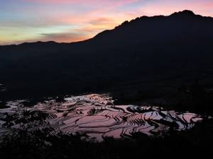 Cina, Yuanyang, risaie all'alba