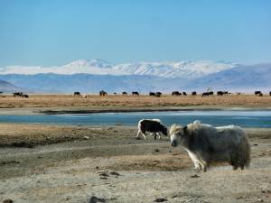 Mongolia, Altai, steppa